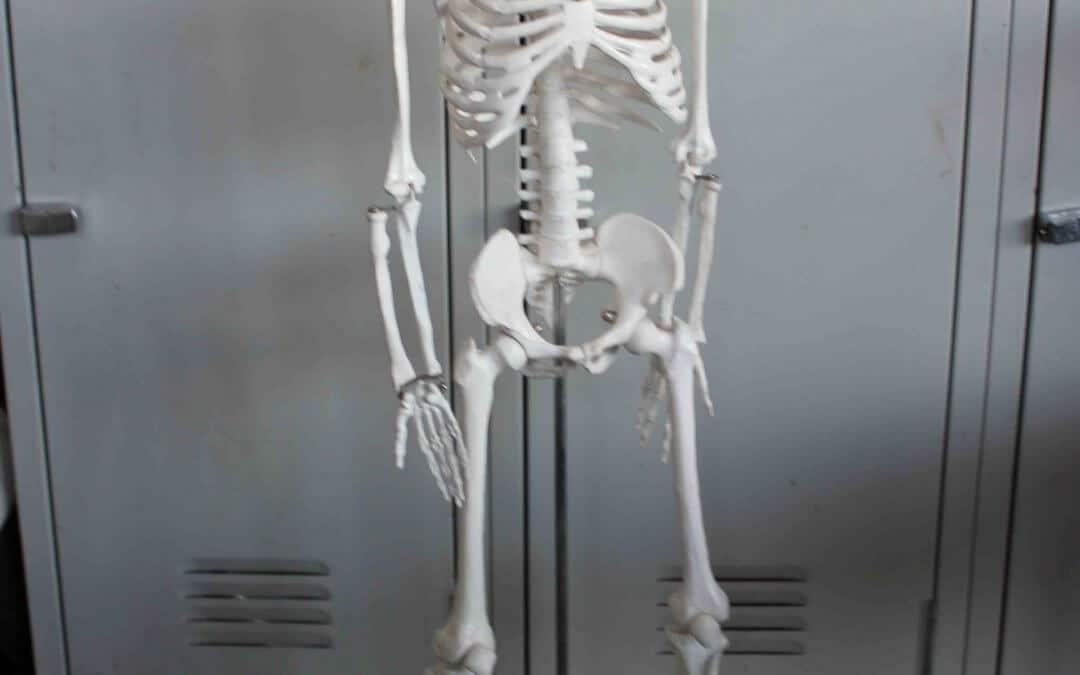 Skeletal Form